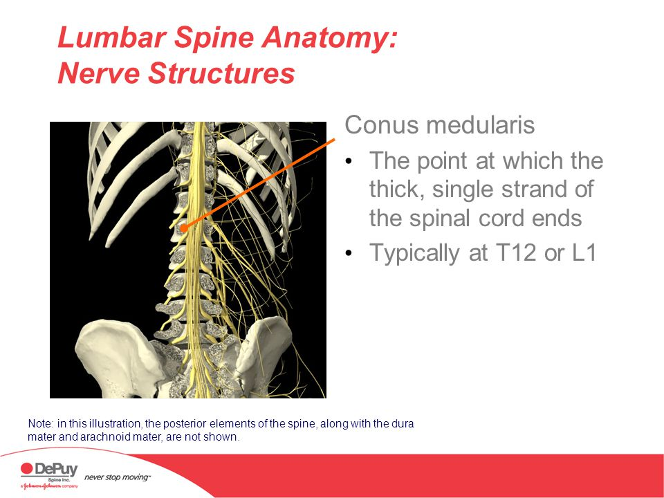 Anatomy Of The Thoracolumbar Spine Physician Name Physician