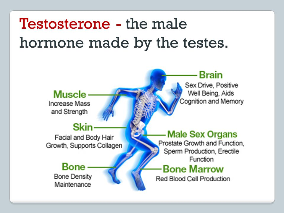 Testosterone - the male hormone made by the testes.