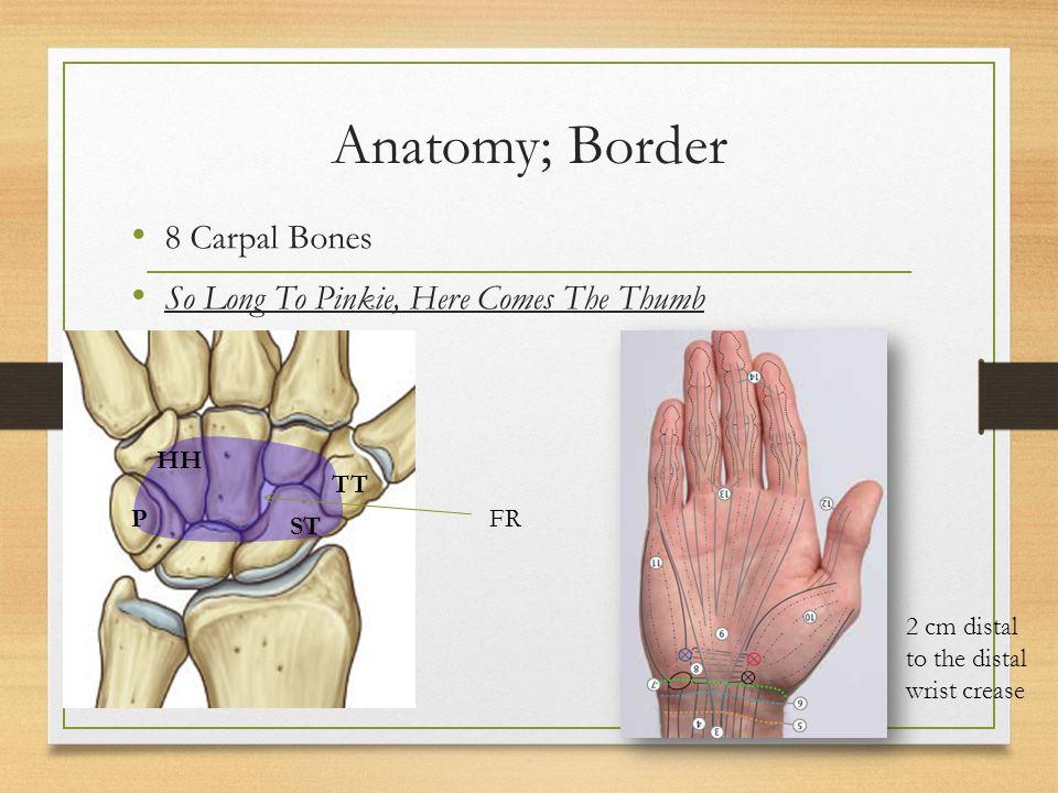 Carpal Tunnel Surag Khadka Contents Anatomy Borders And Contents