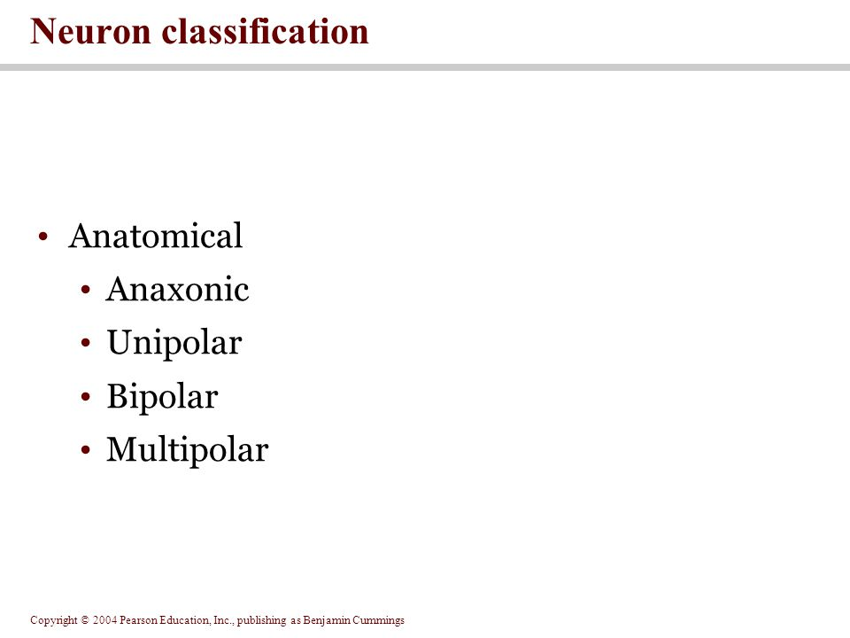 Copyright © 2004 Pearson Education, Inc., publishing as Benjamin Cummings Anatomical Anaxonic Unipolar Bipolar Multipolar Neuron classification