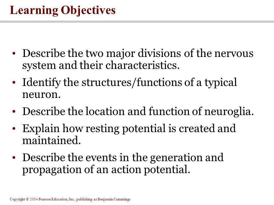 Copyright © 2004 Pearson Education, Inc., publishing as Benjamin Cummings Learning Objectives Describe the two major divisions of the nervous system and their characteristics.