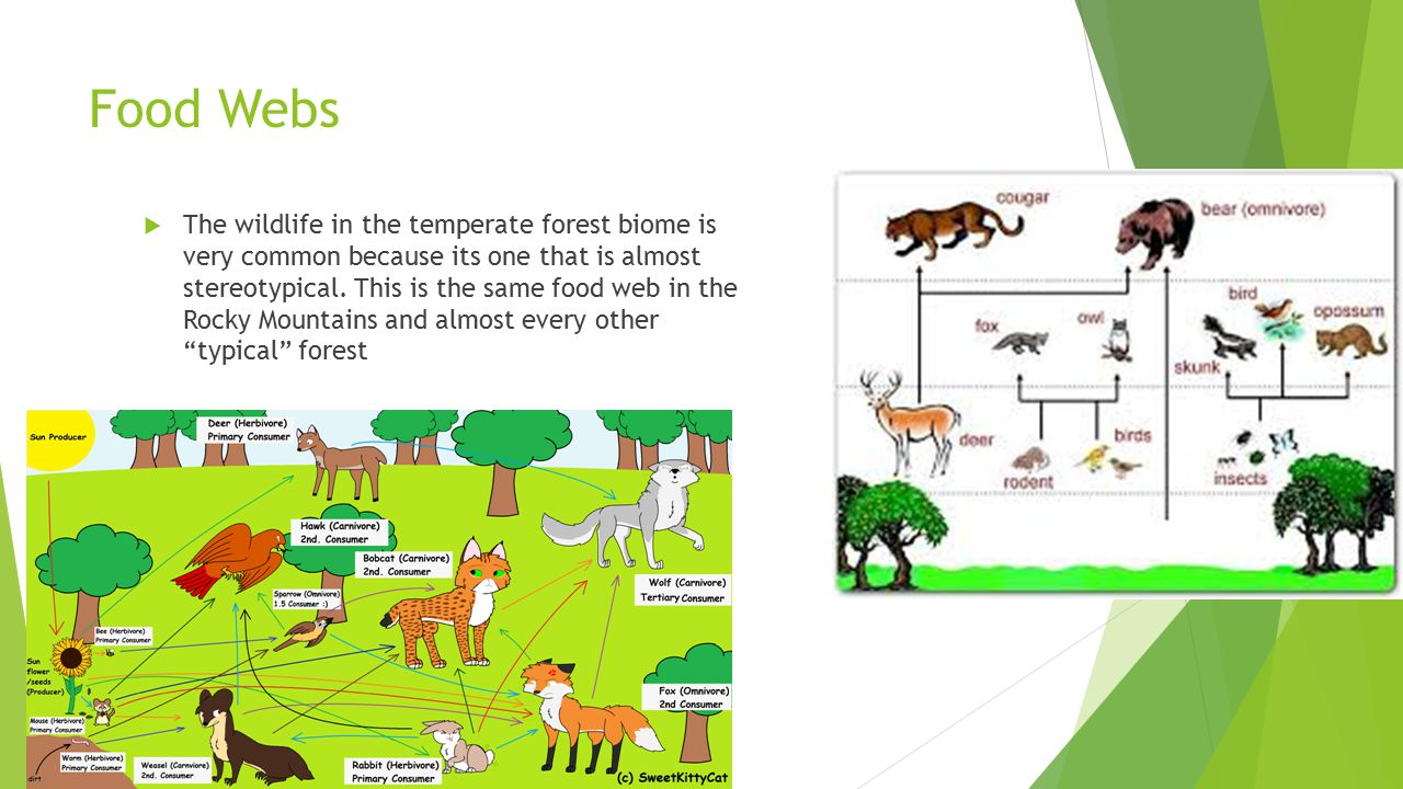 sci 230 temperate forest food web Which of the following statements is not correct a a food web b food chain which of the following is not true about temperate deciduous forests a.
