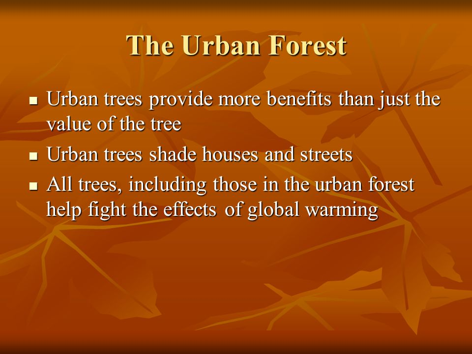 The Urban Forest Urban trees provide more benefits than just the value of the tree Urban trees provide more benefits than just the value of the tree Urban trees shade houses and streets Urban trees shade houses and streets All trees, including those in the urban forest help fight the effects of global warming All trees, including those in the urban forest help fight the effects of global warming