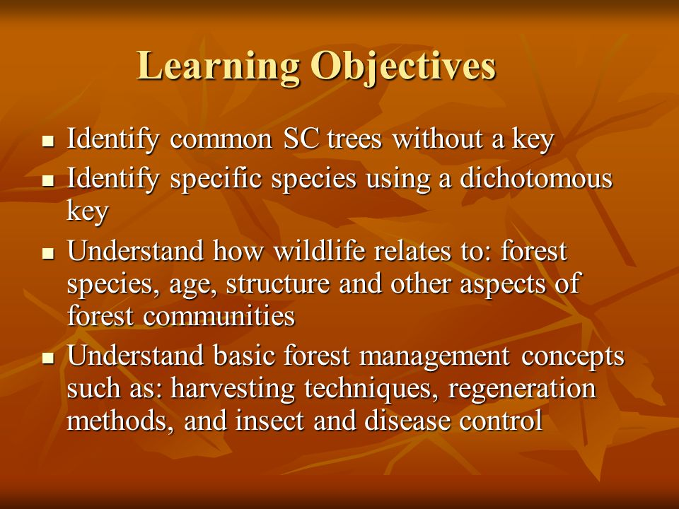 Learning Objectives Identify common SC trees without a key Identify common SC trees without a key Identify specific species using a dichotomous key Identify specific species using a dichotomous key Understand how wildlife relates to: forest species, age, structure and other aspects of forest communities Understand how wildlife relates to: forest species, age, structure and other aspects of forest communities Understand basic forest management concepts such as: harvesting techniques, regeneration methods, and insect and disease control Understand basic forest management concepts such as: harvesting techniques, regeneration methods, and insect and disease control
