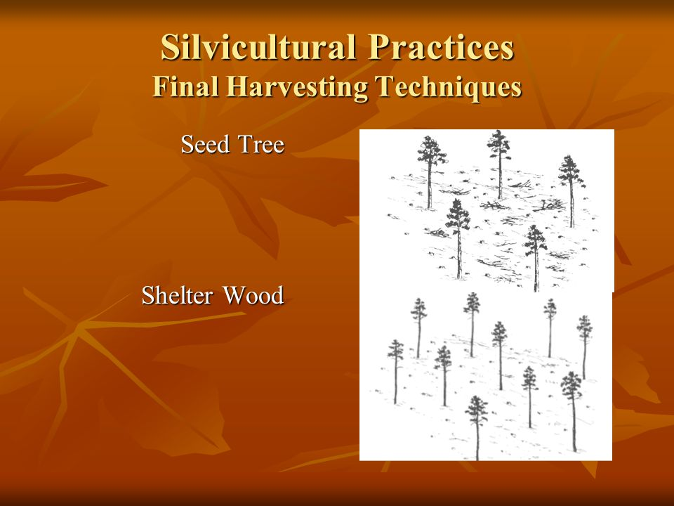 Silvicultural Practices Final Harvesting Techniques Seed Tree Seed Tree Shelter Wood Shelter Wood