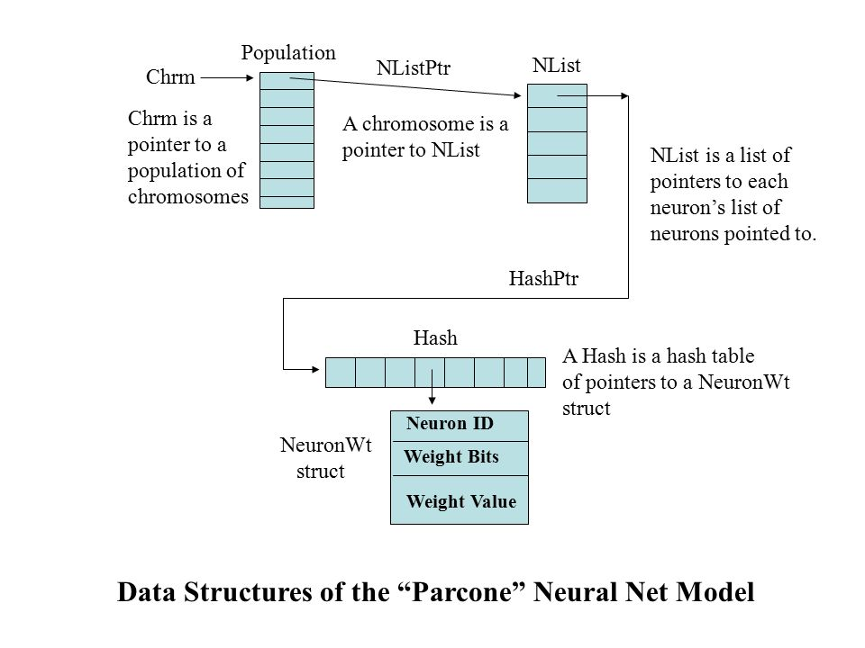 Chrm A chromosome is a pointer to NList A Hash is a hash table of pointers to a NeuronWt struct Neuron ID Weight Bits Weight Value NeuronWt struct HashPtr NList Population Chrm is a pointer to a population of chromosomes NListPtr Hash Data Structures of the Parcone Neural Net Model NList is a list of pointers to each neuron's list of neurons pointed to.