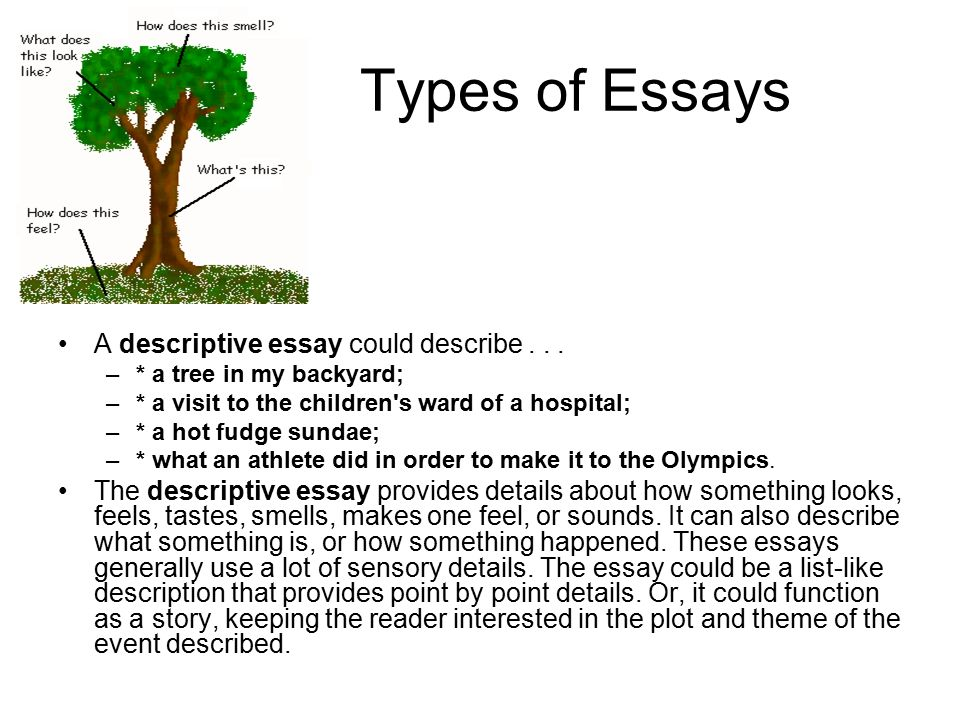 Plant family definition essay