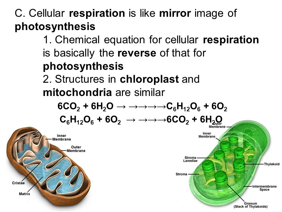 the chemistry behind cellular respiration Photosynthesis and cellular respiration aren't magic, but to your students they can seem to be hands-on experiments are a great way to help them understand the science behind the magic, especially for kinesthetic learners.