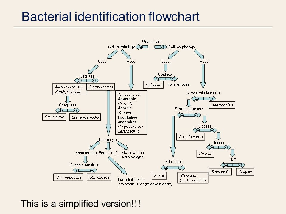 Bacterial metabolism growth characteristics stijn van der veen 51 bacterial identification flowchart this is a simplified version ccuart Gallery