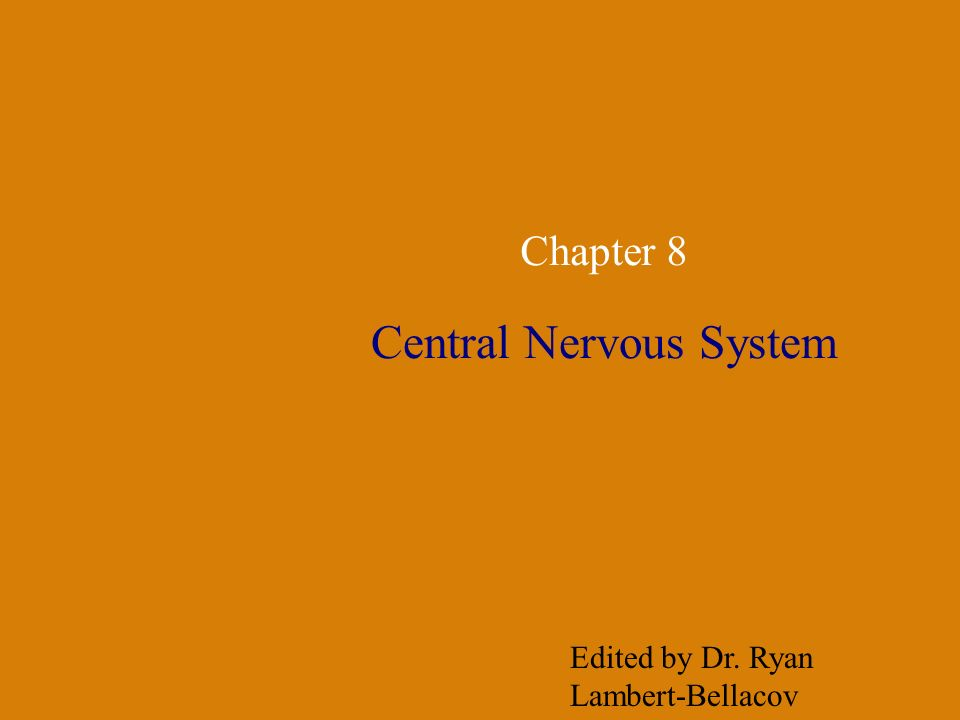 Chapter 8 Central Nervous System Edited by Dr. Ryan Lambert-Bellacov