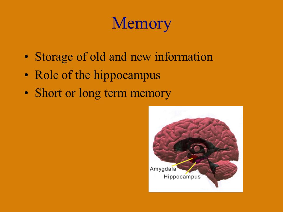 Memory Storage of old and new information Role of the hippocampus Short or long term memory