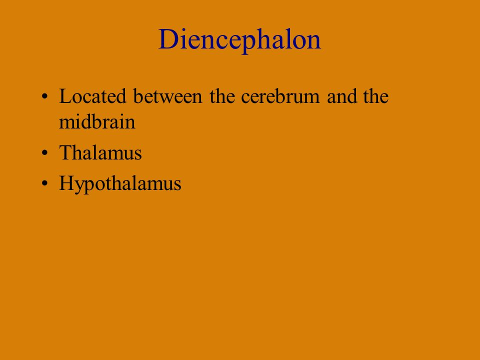 Diencephalon Located between the cerebrum and the midbrain Thalamus Hypothalamus