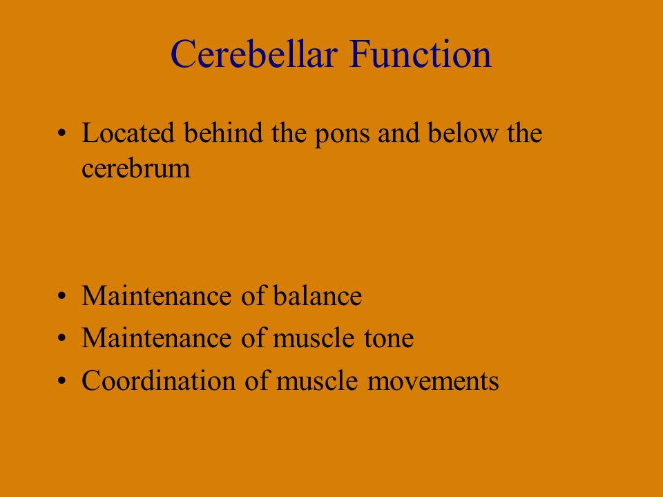 Cerebellar Function Located behind the pons and below the cerebrum Maintenance of balance Maintenance of muscle tone Coordination of muscle movements