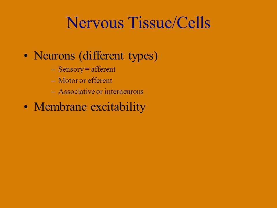 Nervous Tissue/Cells Neurons (different types) –Sensory = afferent –Motor or efferent –Associative or interneurons Membrane excitability
