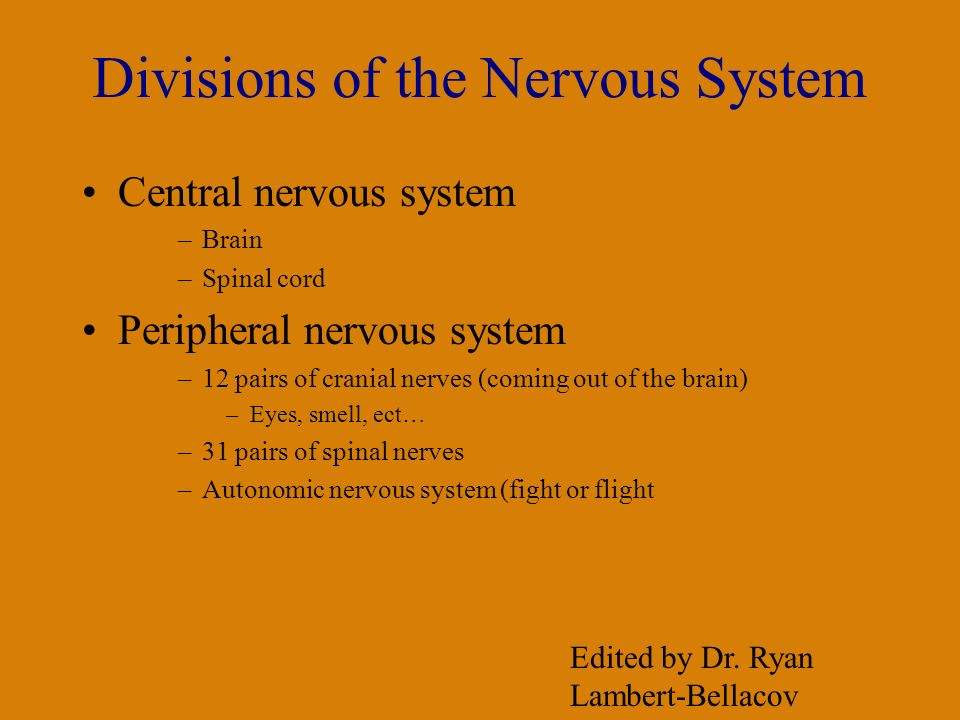 Divisions of the Nervous System Central nervous system –Brain –Spinal cord Peripheral nervous system –12 pairs of cranial nerves (coming out of the brain) –Eyes, smell, ect… –31 pairs of spinal nerves –Autonomic nervous system (fight or flight Edited by Dr.