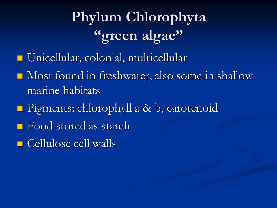 Phylum Chlorophyta green algae Unicellular, colonial, multicellular Unicellular, colonial, multicellular Most found in freshwater, also some in shallow marine habitats Most found in freshwater, also some in shallow marine habitats Pigments: chlorophyll a & b, carotenoid Pigments: chlorophyll a & b, carotenoid Food stored as starch Food stored as starch Cellulose cell walls Cellulose cell walls