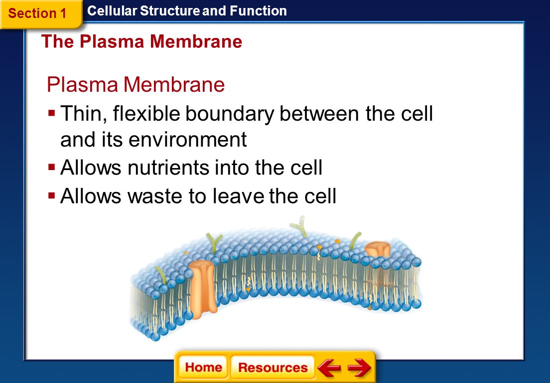 Plasma membrane structure and function worksheet