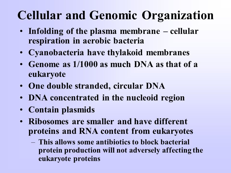Cellular and Genomic Organization Infolding of the plasma membrane – cellular respiration in aerobic bacteria Cyanobacteria have thylakoid membranes Genome as 1/1000 as much DNA as that of a eukaryote One double stranded, circular DNA DNA concentrated in the nucleoid region Contain plasmids Ribosomes are smaller and have different proteins and RNA content from eukaryotes –This allows some antibiotics to block bacterial protein production will not adversely affecting the eukaryote proteins