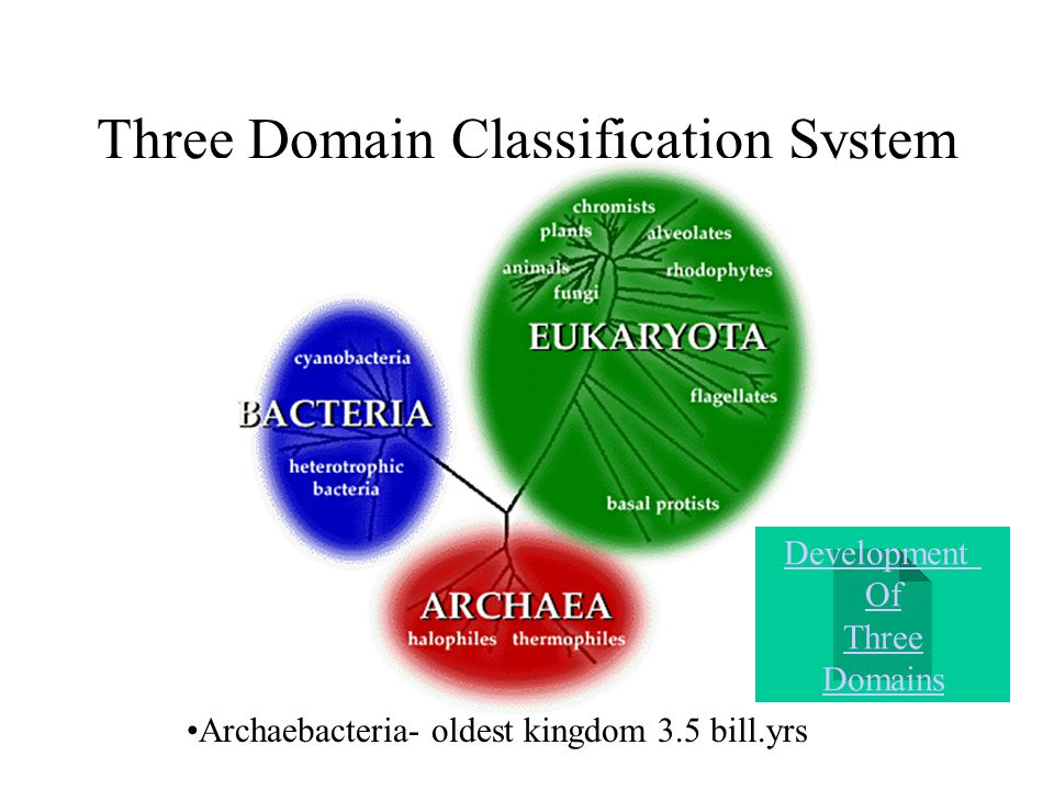 three domain system of classification