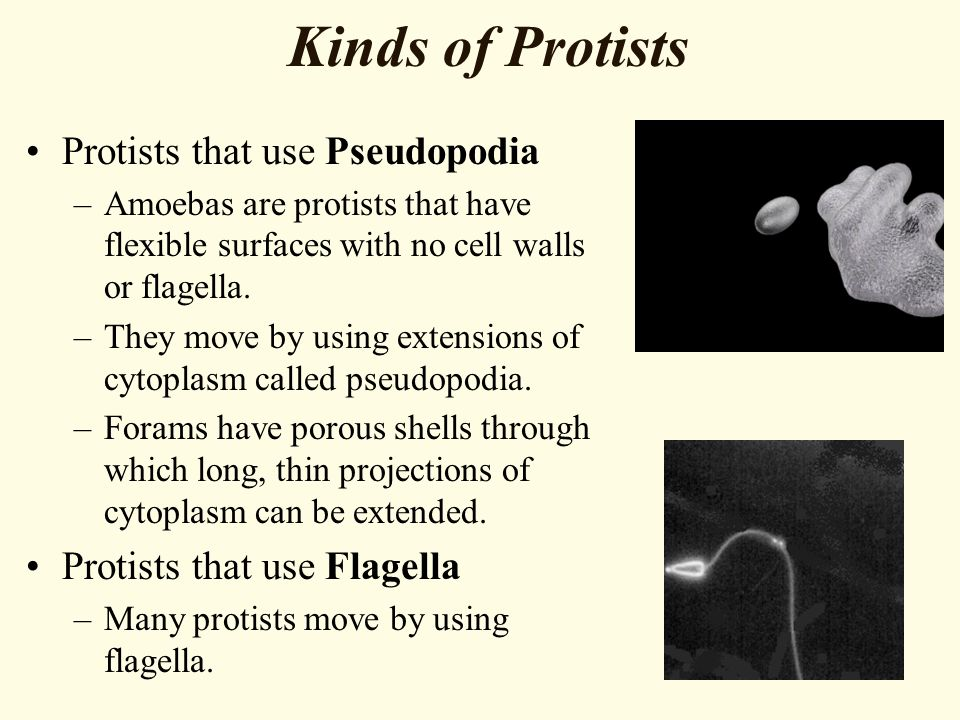 Kinds of Protists Protists that use Pseudopodia –Amoebas are protists that have flexible surfaces with no cell walls or flagella.