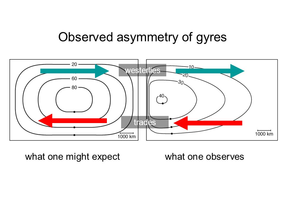 Observed asymmetry of gyres what one might expect what one observes westerlies trades