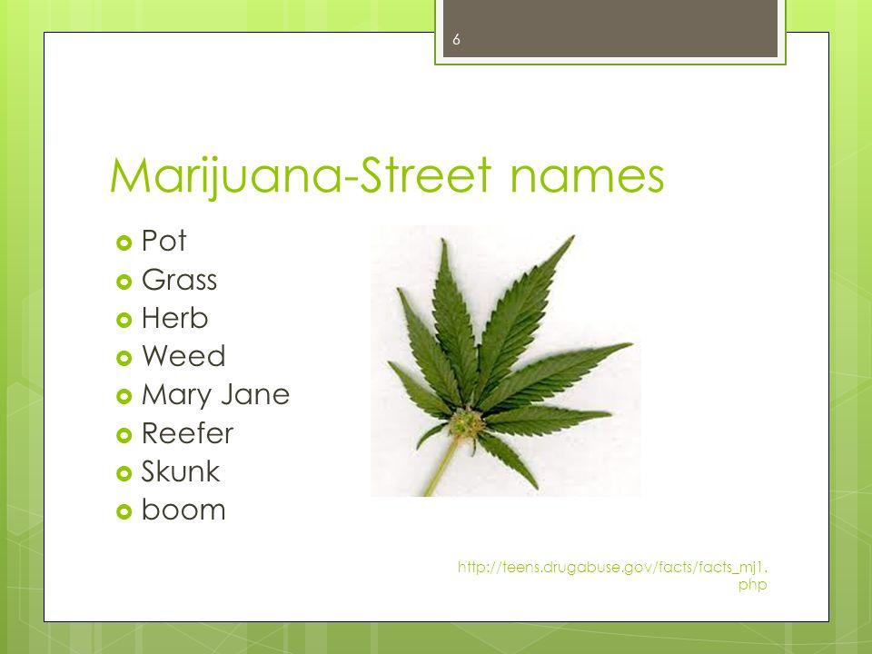 Marijuana Drug Project - ThingLink