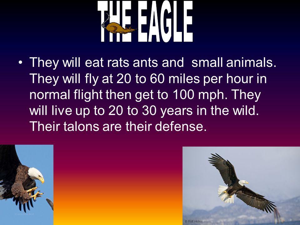 They will eat buffalo zebra wildeabeast water buck.