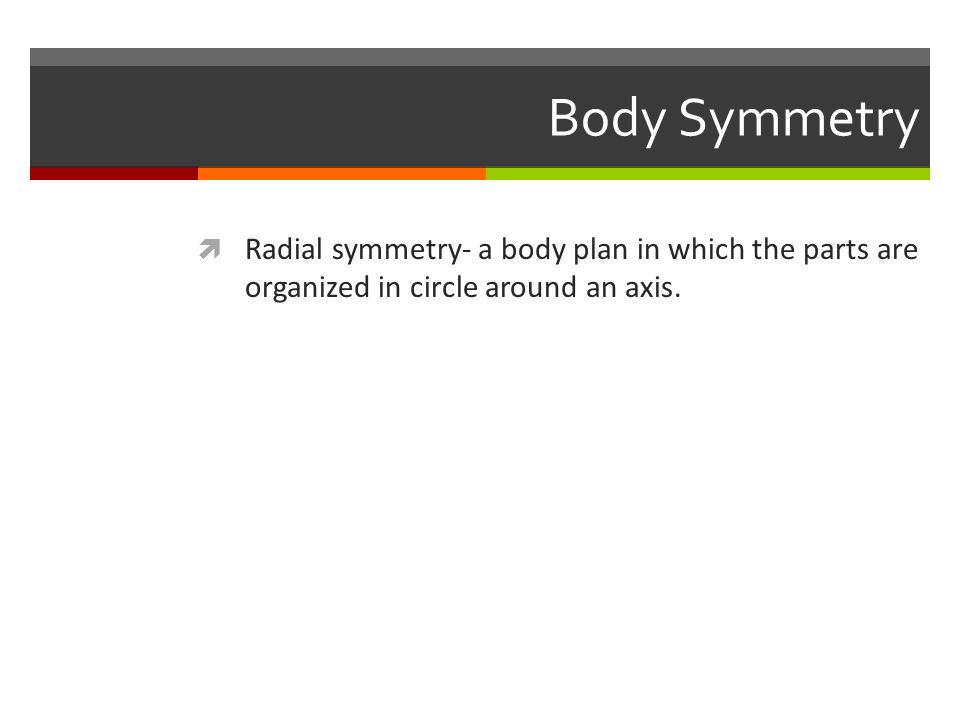 Body Symmetry  Radial symmetry- a body plan in which the parts are organized in circle around an axis.