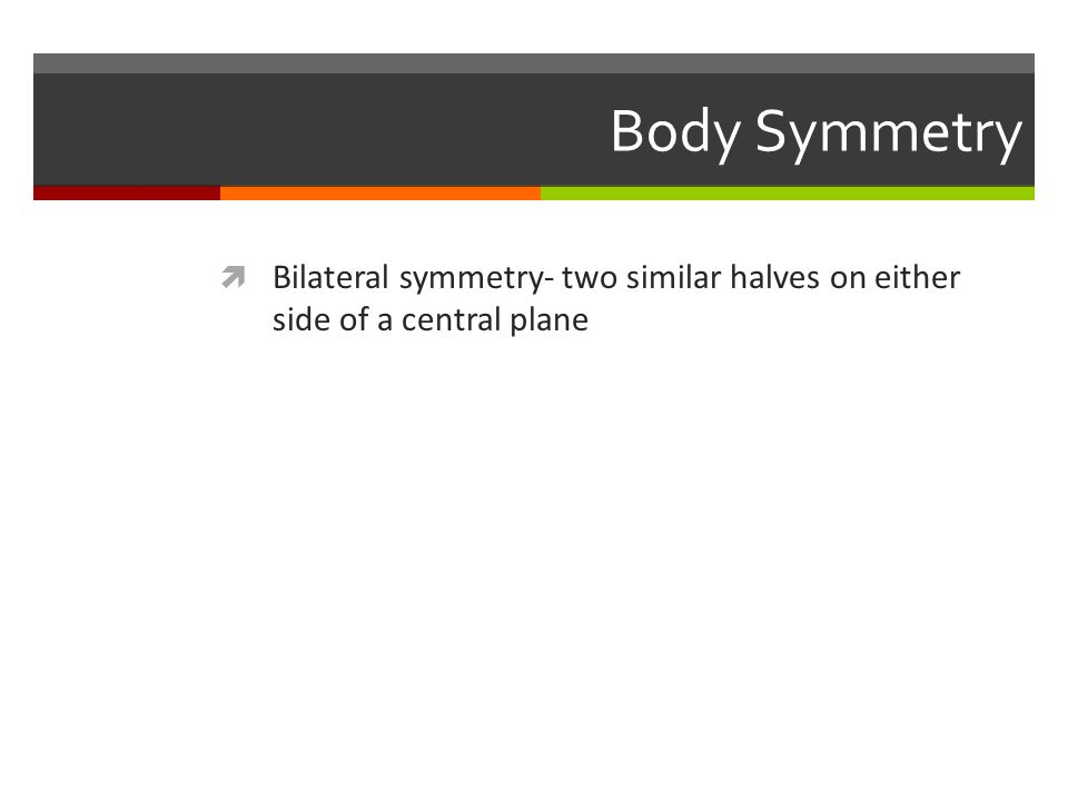 Body Symmetry  Bilateral symmetry- two similar halves on either side of a central plane