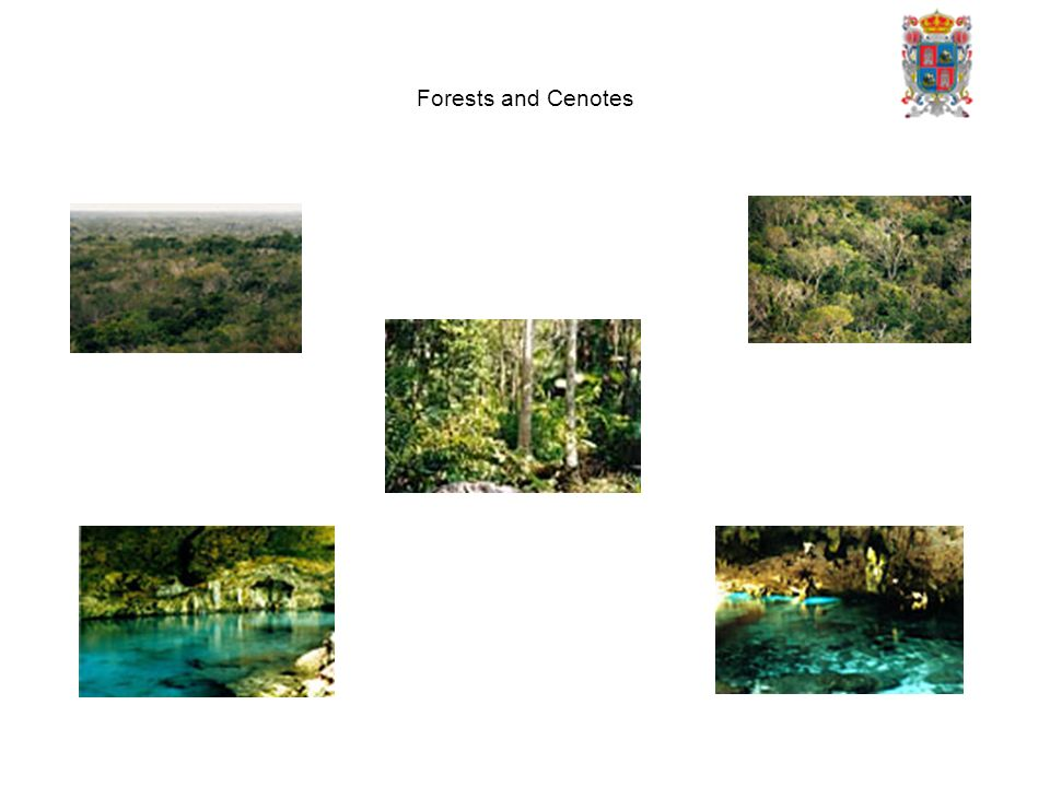 Forests and Cenotes