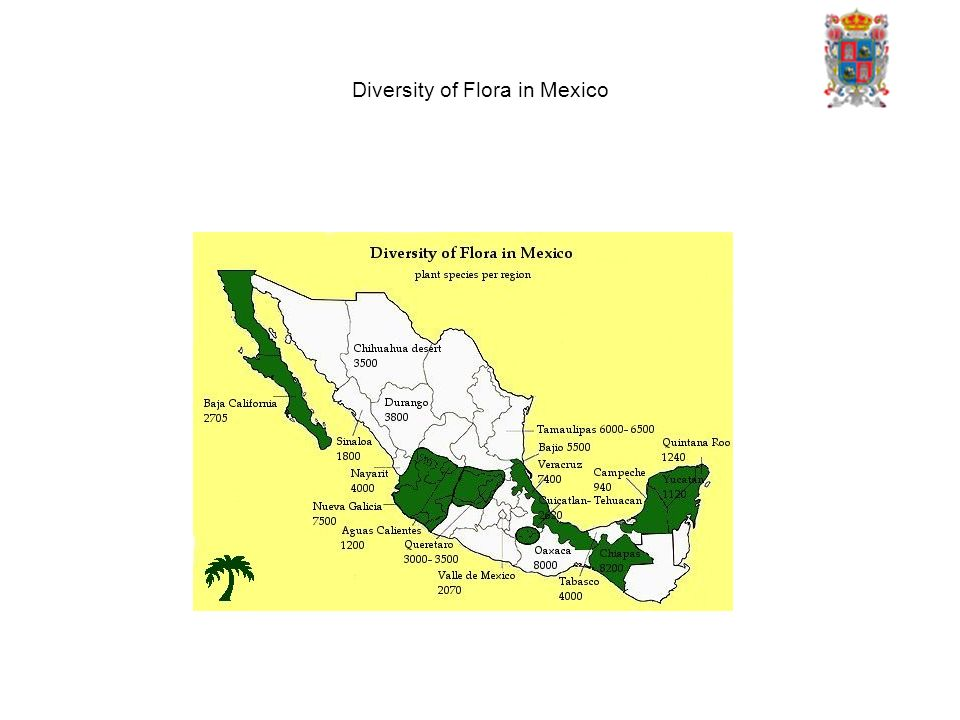 Diversity of Flora in Mexico