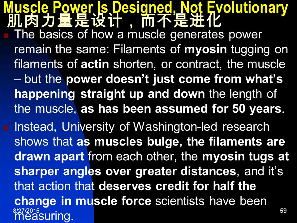 8/27/ Muscle Power Is Designed, Not Evolutionary 肌肉力量是设计,而不是进化 The basics of how a muscle generates power remain the same: Filaments of myosin tugging on filaments of actin shorten, or contract, the muscle – but the power doesn't just come from what's happening straight up and down the length of the muscle, as has been assumed for 50 years.