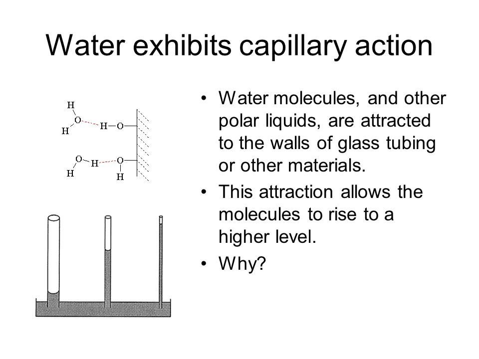 Water exhibits capillary action Water molecules, and other polar liquids, are attracted to the walls of glass tubing or other materials.
