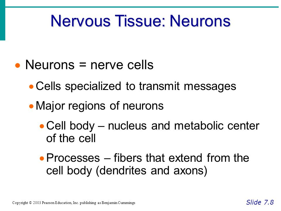 Nervous Tissue: Neurons Slide 7.8 Copyright © 2003 Pearson Education, Inc.