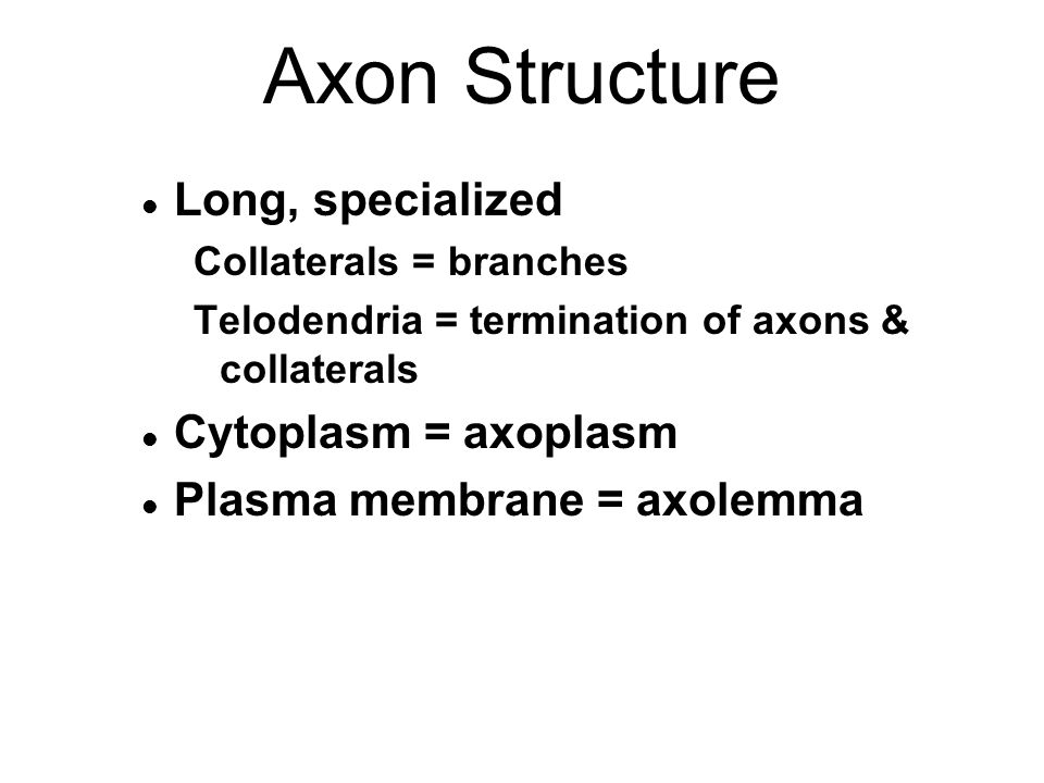 Axon Structure l Long, specialized Collaterals = branches Telodendria = termination of axons & collaterals l Cytoplasm = axoplasm l Plasma membrane = axolemma