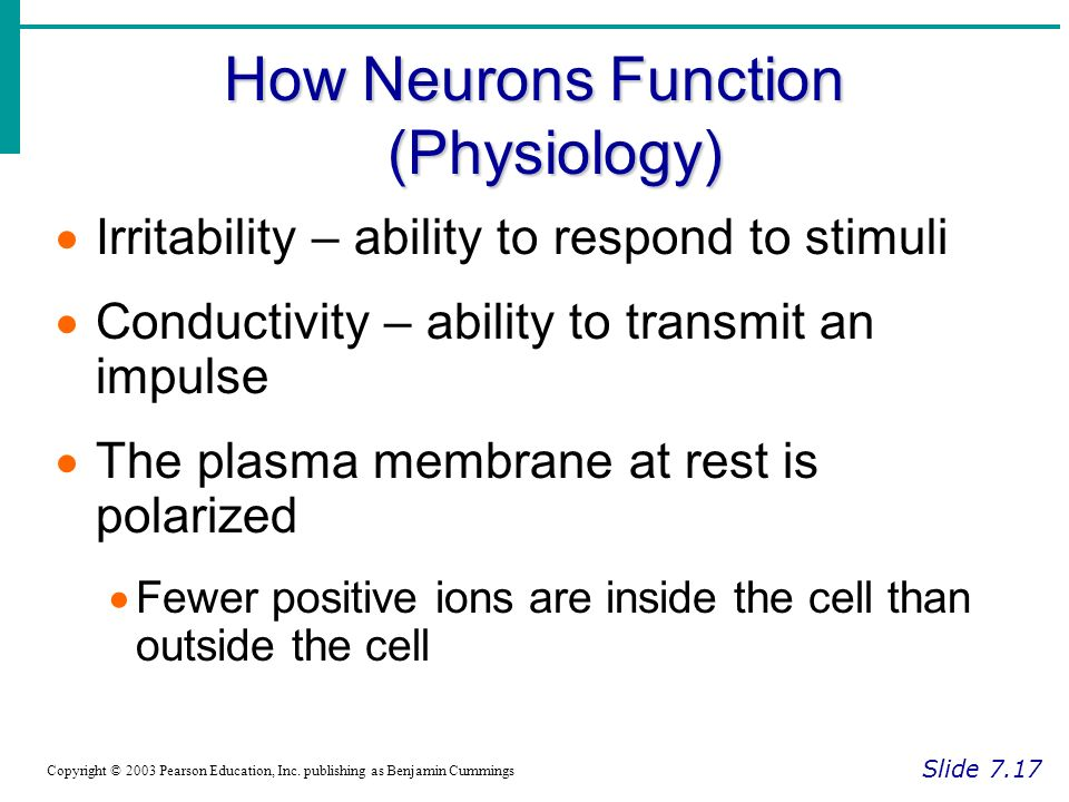 How Neurons Function (Physiology) Slide 7.17 Copyright © 2003 Pearson Education, Inc.