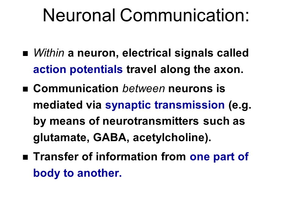 Neuronal Communication: n Within a neuron, electrical signals called action potentials travel along the axon.
