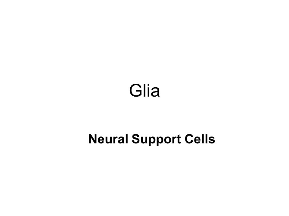 Glia Neural Support Cells
