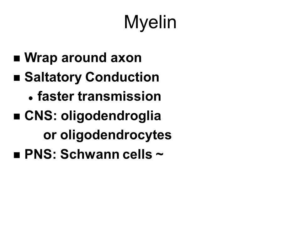 Myelin n Wrap around axon n Saltatory Conduction l faster transmission n CNS: oligodendroglia or oligodendrocytes n PNS: Schwann cells ~