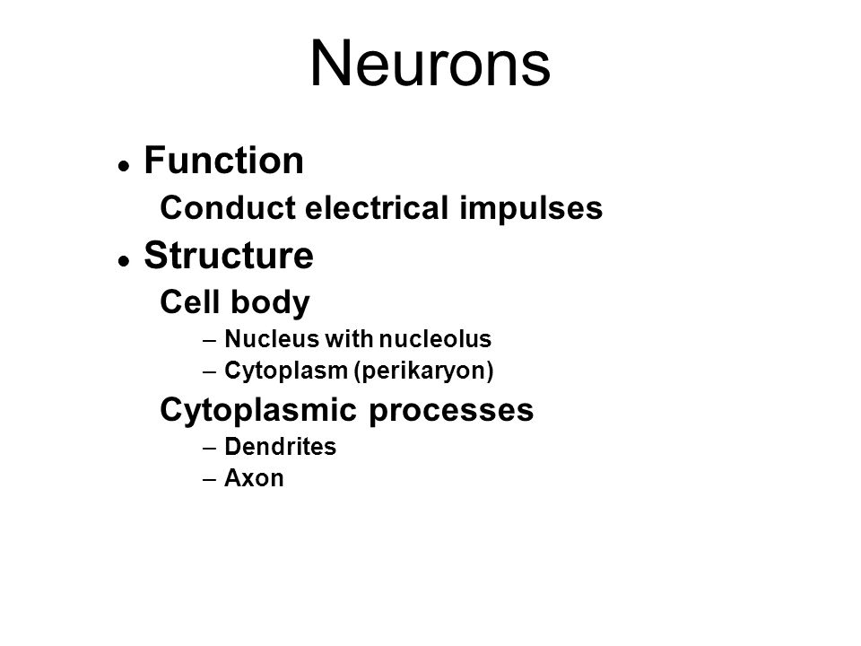 Neurons l Function Conduct electrical impulses l Structure Cell body –Nucleus with nucleolus –Cytoplasm (perikaryon) Cytoplasmic processes –Dendrites –Axon