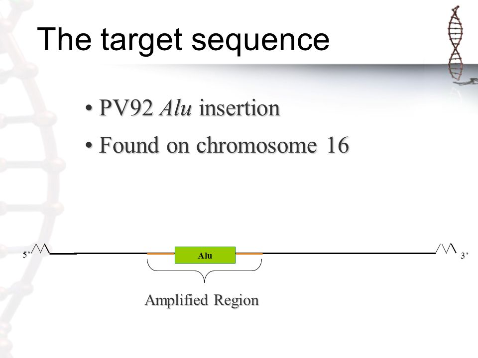 The target sequence PV92 Alu insertion PV92 Alu insertion Found on chromosome 16 Found on chromosome 16 5' 3' Alu Amplified Region