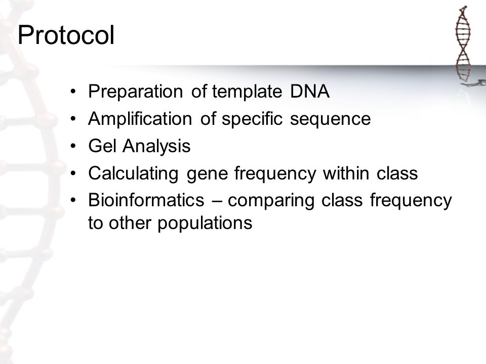 Protocol Preparation of template DNA Amplification of specific sequence Gel Analysis Calculating gene frequency within class Bioinformatics – comparing class frequency to other populations