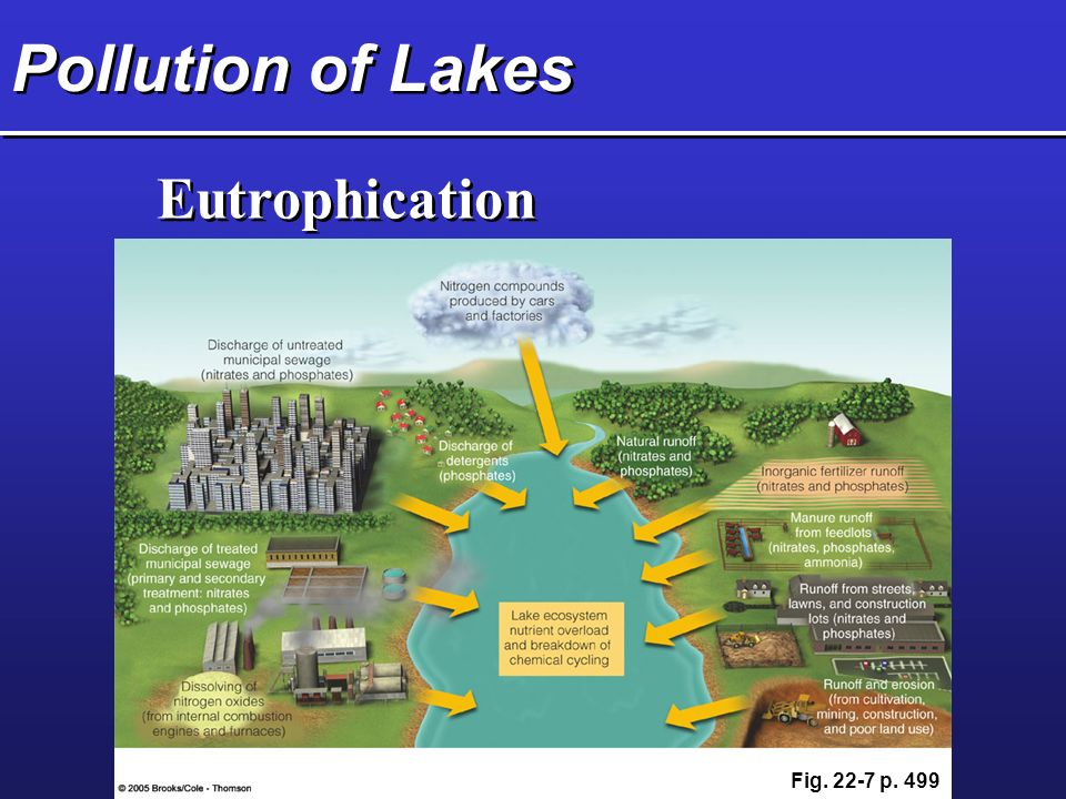 Pollution of Lakes Eutrophication Fig p. 499