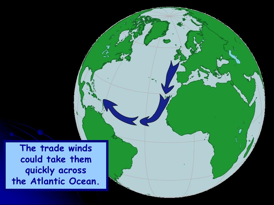 The trade winds could take them quickly across the Atlantic Ocean.