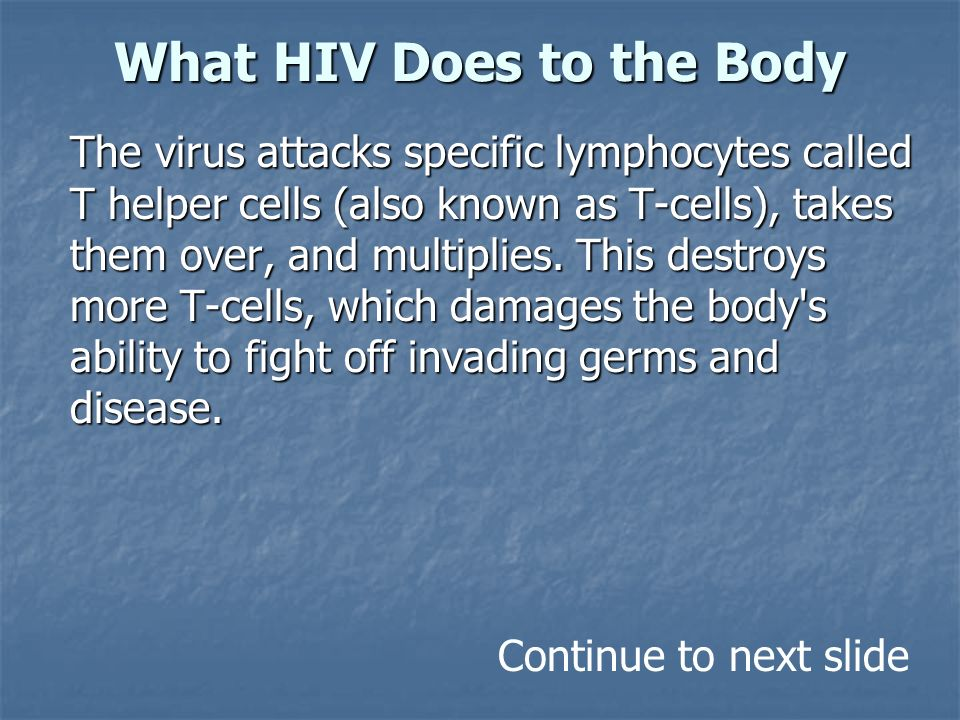 What HIV Does to the Body The virus attacks specific lymphocytes called T helper cells (also known as T-cells), takes them over, and multiplies.