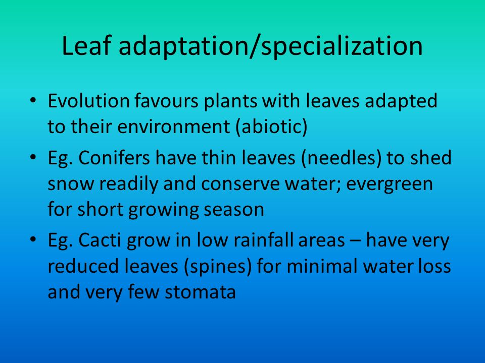 Leaf adaptation/specialization Evolution favours plants with leaves adapted to their environment (abiotic) Eg.