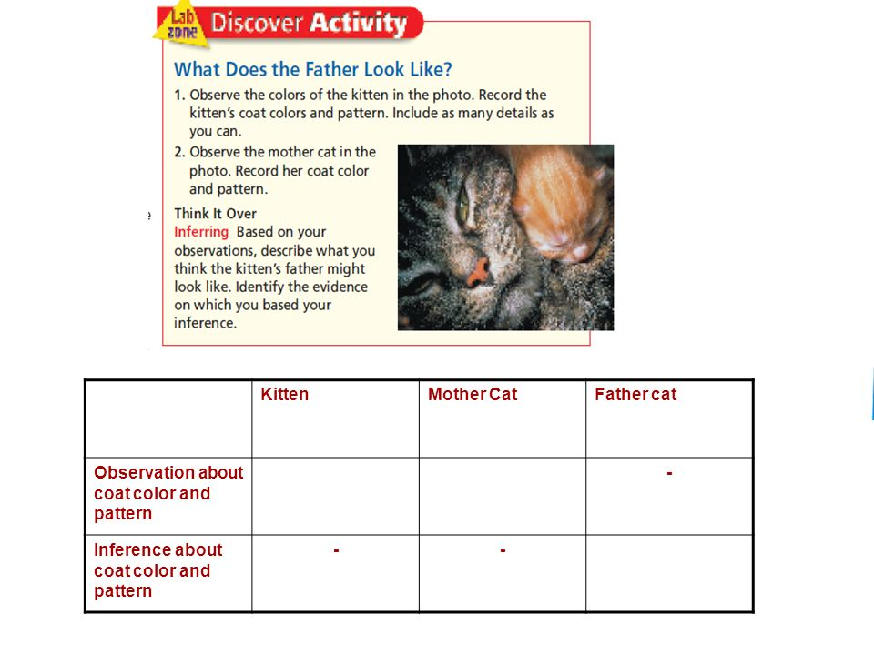 Slide 4 of 20 Copyright Pearson Prentice Hall KittenMother CatFather cat Observation about coat color and pattern - Inference about coat color and pattern --