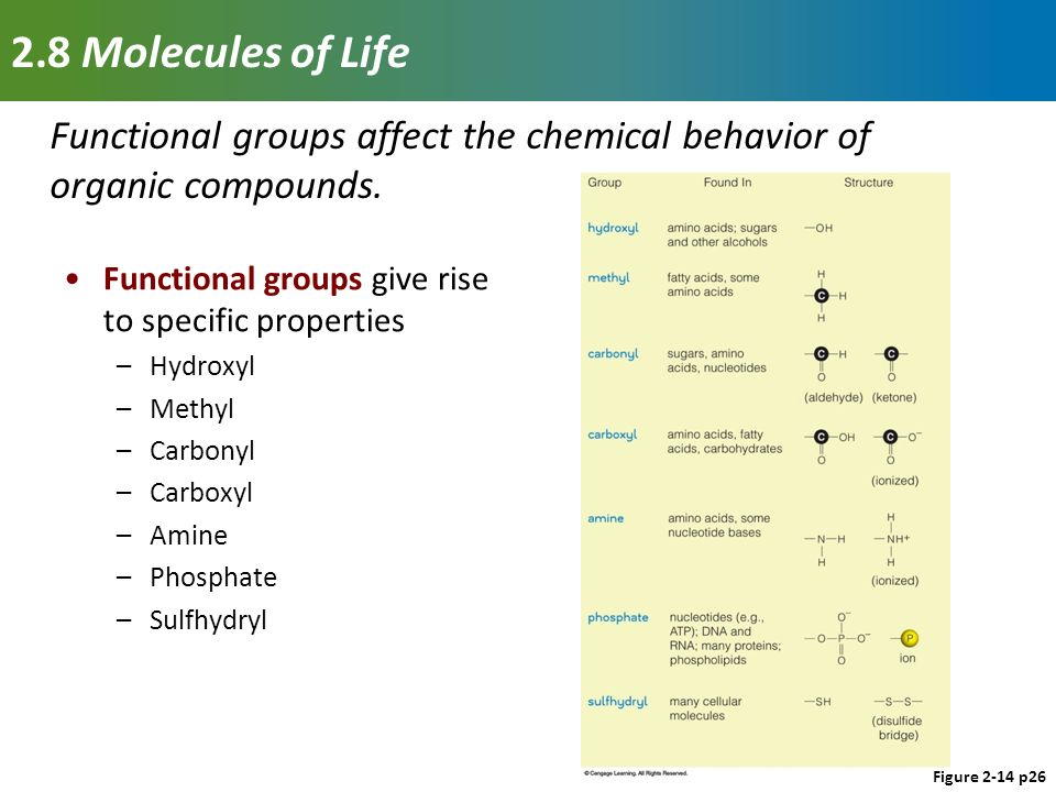properties of functional groups essay