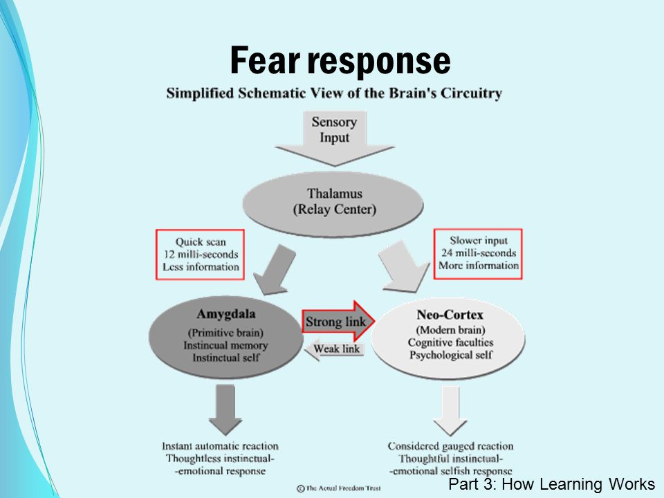 Fear response Part 3: How Learning Works