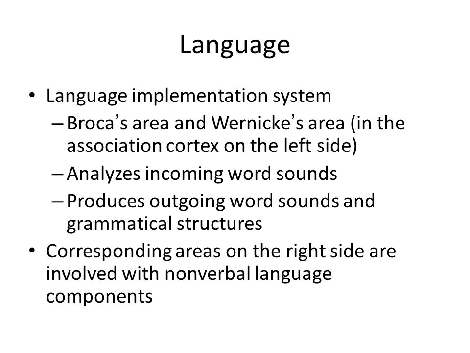 Is there a link between Wernicke's area and concentration levels?